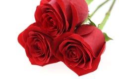κόκκινα τριαντάφυλλα Στοκ Εικόνα