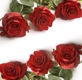 κόκκινα τριαντάφυλλα Στοκ Εικόνες
