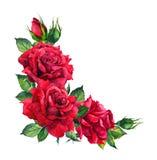 Κόκκινα τριαντάφυλλα - floral σύνθεση γωνιών Watercolor για τη γαμήλια κάρτα απεικόνιση αποθεμάτων