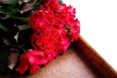 Κόκκινα τριαντάφυλλα για την ημέρα του βαλεντίνου Στοκ Εικόνες