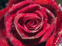 κόκκινα τριαντάφυλλα εστίασης ανασκόπησης εκλεκτικά Στοκ εικόνες με δικαίωμα ελεύθερης χρήσης