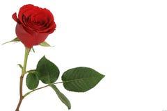 κόκκινα τριαντάφυλλα εστίασης ανασκόπησης εκλεκτικά Στοκ φωτογραφία με δικαίωμα ελεύθερης χρήσης