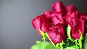 Κόκκινα τριαντάφυλλα με τις πτώσεις δροσιάς σε ένα μαύρο υπόβαθρο απόθεμα βίντεο