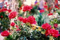 Κόκκινα τριαντάφυλλα που ανθίζουν στον κήπο για το υπόβαθρο ή τη σύσταση, ημέρα βαλεντίνων ` s Στοκ φωτογραφία με δικαίωμα ελεύθερης χρήσης