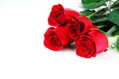 Κόκκινα τριαντάφυλλα που βάζουν στο άσπρο υπόβαθρο Στοκ Φωτογραφίες