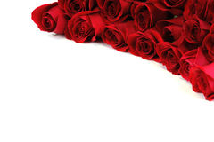 Κόκκινα τριαντάφυλλα στη γωνία του άσπρου υποβάθρου Στοκ εικόνα με δικαίωμα ελεύθερης χρήσης