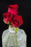 Κόκκινα τριαντάφυλλα στο πλαστικό μπουκάλι στοκ φωτογραφία με δικαίωμα ελεύθερης χρήσης