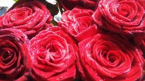κόκκινα τριαντάφυλλα Στοκ Φωτογραφίες