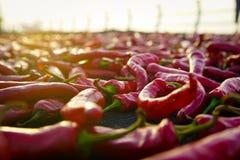 Κόκκινα τσίλι Στοκ Εικόνα