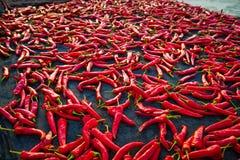 Κόκκινα τσίλι Στοκ Φωτογραφία