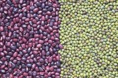 Κόκκινα φασόλια, πράσινα φασόλια Στοκ Εικόνα