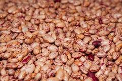 Κόκκινα φασόλια Στοκ φωτογραφία με δικαίωμα ελεύθερης χρήσης