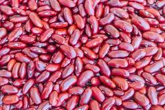 Κόκκινα φασόλια Στοκ Εικόνα