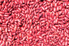 Κόκκινα φασόλια Στοκ Φωτογραφία