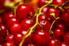 Κόκκινα φρούτα - ρεύμα Στοκ Φωτογραφία