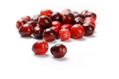 Κόκκινα φρούτα των βακκίνιων Στοκ Εικόνες