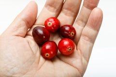 Κόκκινα φρούτα των βακκίνιων Στοκ Εικόνα