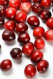 Κόκκινα φρούτα των βακκίνιων Στοκ εικόνες με δικαίωμα ελεύθερης χρήσης