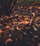 Κόκκινα φύλλα που πέφτουν έξω του δέντρου στοκ φωτογραφίες με δικαίωμα ελεύθερης χρήσης