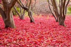 Κόκκινα φύλλα στο δασικό πάτωμα στοκ εικόνες