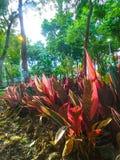 Κόκκινα φύλλα στο πάρκο στο τέλος της ημέρας Στοκ Εικόνα