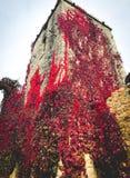 Κόκκινα φύλλα στο Πεκίνο στοκ εικόνα με δικαίωμα ελεύθερης χρήσης