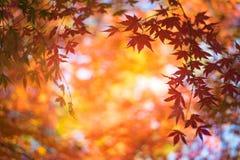 Κόκκινα φύλλα στο υπόβαθρο φθινοπώρου στοκ φωτογραφίες