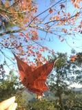 Κόκκινα φύλλα στο Χονγκ Κονγκ στοκ φωτογραφία με δικαίωμα ελεύθερης χρήσης