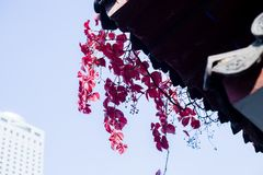Κόκκινα φύλλα σφενδάμου φθινοπώρου Στοκ φωτογραφία με δικαίωμα ελεύθερης χρήσης