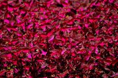 Κόκκινα φύλλα φύλλων στοκ φωτογραφία με δικαίωμα ελεύθερης χρήσης