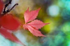Κόκκινα φύλλα και υπόβαθρα θαμπάδων Στοκ εικόνα με δικαίωμα ελεύθερης χρήσης