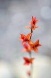 Κόκκινα φύλλα σε έναν θάμνο brunch Στοκ φωτογραφία με δικαίωμα ελεύθερης χρήσης