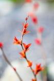 Κόκκινα φύλλα σε έναν θάμνο brunch Στοκ εικόνα με δικαίωμα ελεύθερης χρήσης