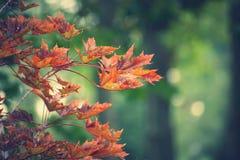 Κόκκινα φύλλα σε ένα πράσινο υπόβαθρο Στοκ φωτογραφίες με δικαίωμα ελεύθερης χρήσης