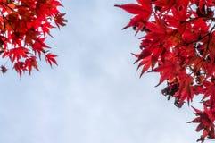 Κόκκινα φύλλα το φθινόπωρο Στοκ Φωτογραφίες