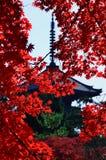 Κόκκινα φύλλα φθινοπώρου και παλαιός ναός, Κιότο Ιαπωνία Στοκ Φωτογραφία
