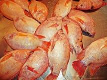 Κόκκινα ψάρια παγωμένα που πωλούνται Tilapia στην αγορά Στοκ Φωτογραφίες