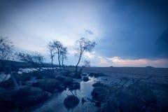 κόκκινα ψηλά τρία δέντρα φοινικών οάσεων ερήμων Στοκ Εικόνες