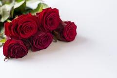 Κόκκινα όμορφα λουλούδια στο λευκό Ανθοδέσμη των τριαντάφυλλων κόκκινος αυξήθηκε στοκ εικόνες με δικαίωμα ελεύθερης χρήσης