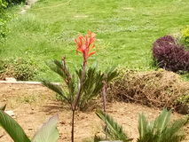 Κόκκινα όμορφα λουλούδια Στοκ Φωτογραφίες