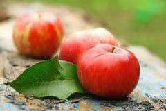 Κόκκινα ώριμα μήλα στον κήπο Στοκ Φωτογραφία