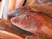 Κόκκινα gurnard ψάρια για την πώληση στην αγορά ψαριών Στοκ φωτογραφίες με δικαίωμα ελεύθερης χρήσης