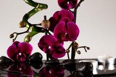 Κόκκινα orchids Στοκ Εικόνες