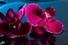 Κόκκινα orchids Στοκ εικόνα με δικαίωμα ελεύθερης χρήσης