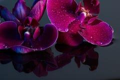 Κόκκινα orchids Στοκ Φωτογραφίες