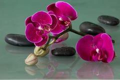Κόκκινα orchids Στοκ εικόνες με δικαίωμα ελεύθερης χρήσης