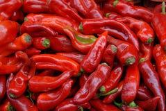 Κόκκινα pappers Στοκ Φωτογραφία