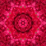 Κόκκινα peony λουλούδια Στοκ Εικόνες