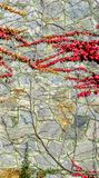κόκκινες άγρια περιοχές &sigm Στοκ φωτογραφίες με δικαίωμα ελεύθερης χρήσης