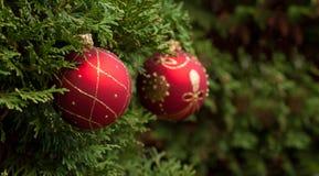 Κόκκινες λαμπρές σφαίρες στο χριστουγεννιάτικο δέντρο Στοκ Εικόνα